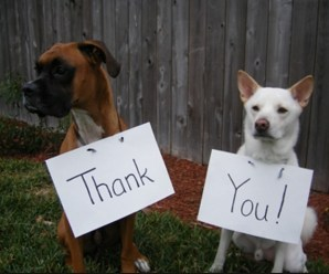 Top 10 Images of Dogs Saying Thank You