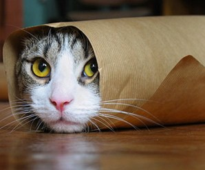 Top 10 Funniest Images of Gift Wrapped Cats