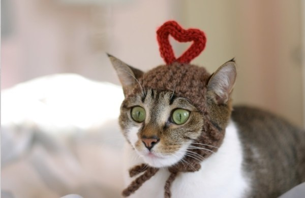 Top 10 Images of Cats in Love