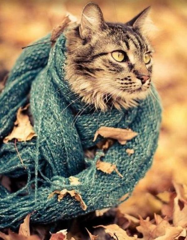 Cat Wearing Blue Scarf