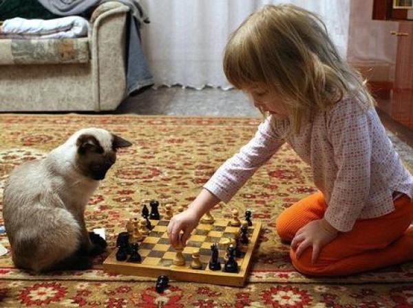 Cat playing Chess