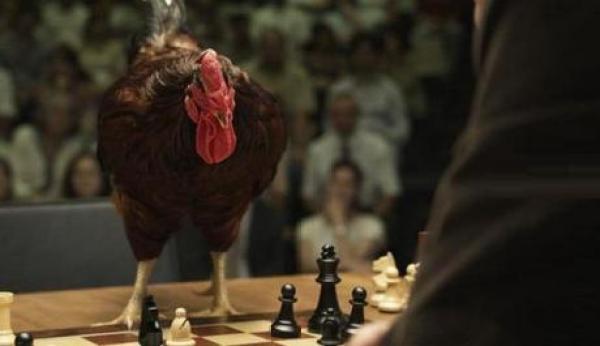 Chicken Playing Chess