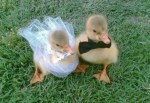Top 10 Images of Animals Getting Married