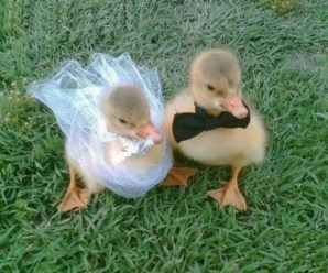 Ten Pictures of Animals Getting Married in the Traditional Way