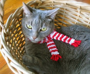 Ten Pictures of Cats Wearing Scarves to Keep Warm This Winter