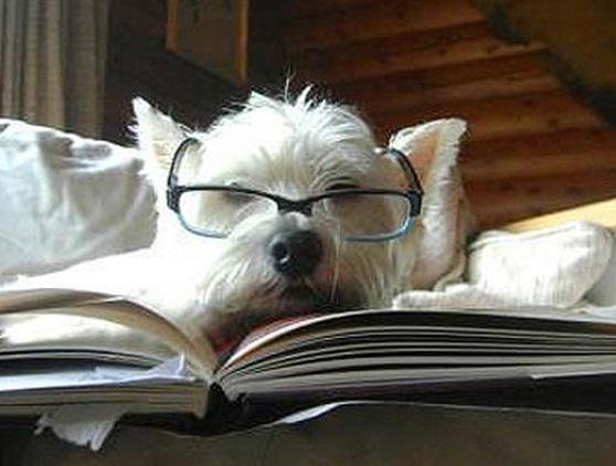 Top 10 Civil Woofigation Dog Lawyers