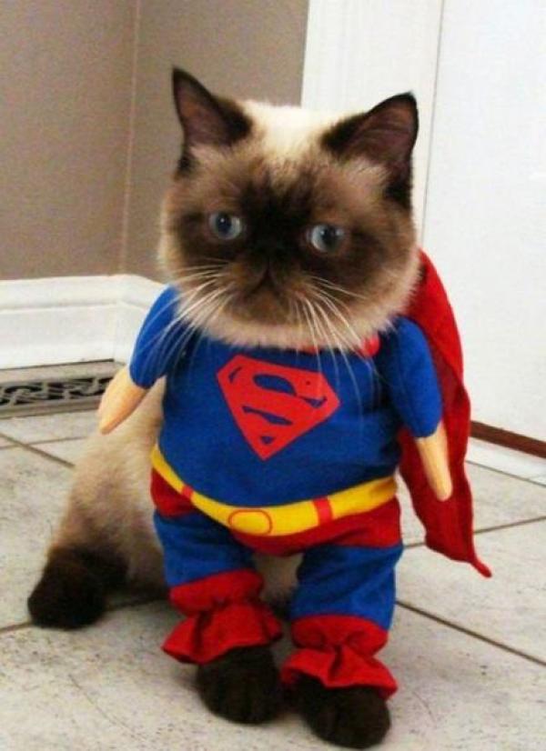 Superhero Cat Inspired By Super Man