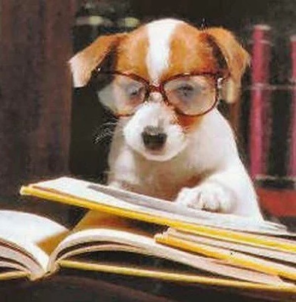 Dog Reading Law Books