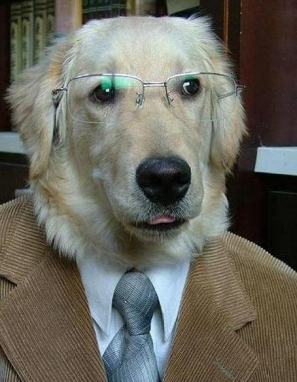 Dog Dressed as a Lawyer