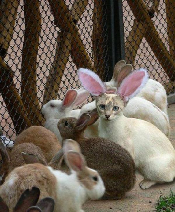 Cat pretending to be a rabbit