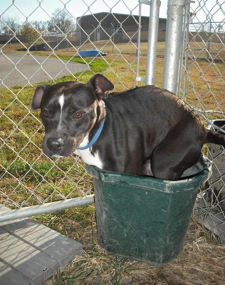Dog in a Bucket