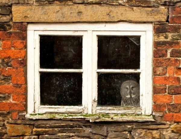 Top 10 Stylish Windows for Your House