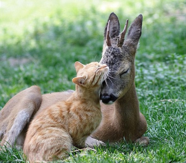 Top 10 Images of Cats with Unlikely Animal Friends