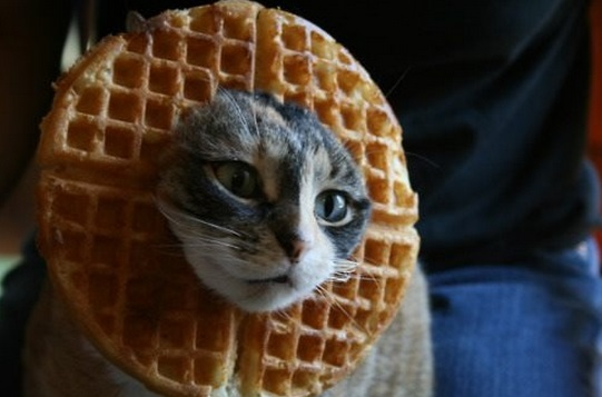 Top 10 Funny Images of Cats In Food