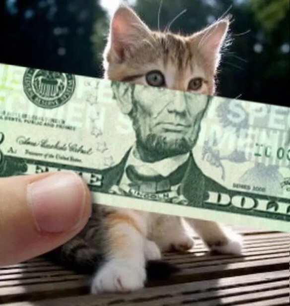 put the money to the cat