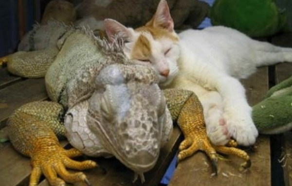 Top 10 Best Images of Cats and Dragons