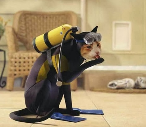 Top 10 Funny Animals in Scuba Diving Gear