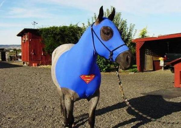 Horse in a Superman Costume