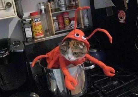 Cat Dressed as Lobster