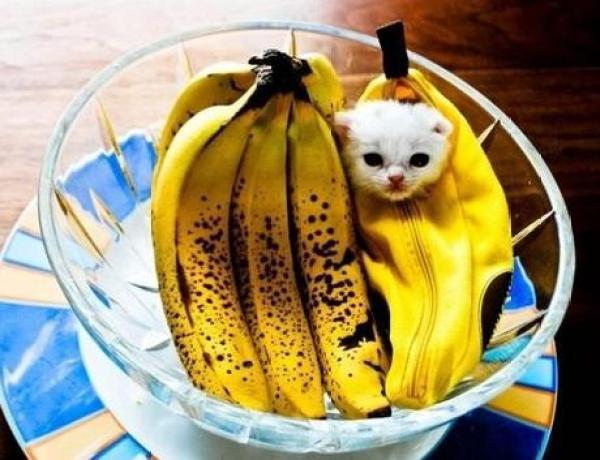 Cat Dressed as Banana
