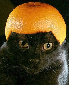 Cat Wearing a Helmet Made From Orange