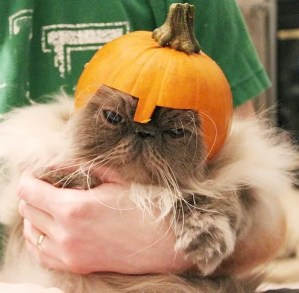 The World's Top 10 Best Images of Cats Wearing Helmets Made of Fruit