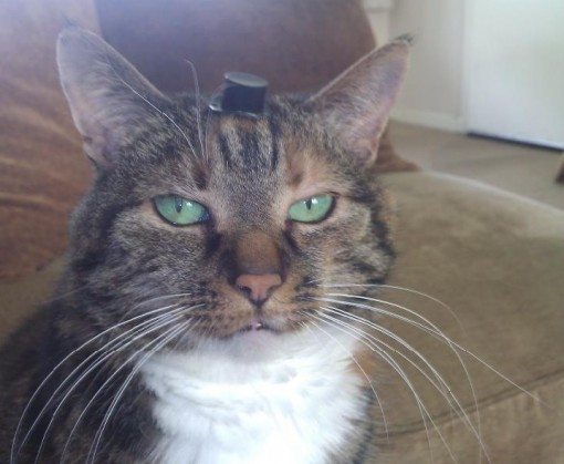 Top 10 Funny Images of Cats in Tiny HatsTop 10 Funny Images of Cats in Tiny Hats