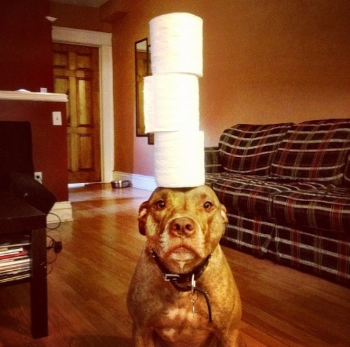 Top 10 Images of Things Balanced on Dogs Head