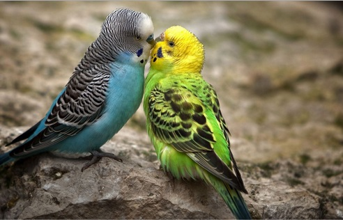 Top 10 Best Images of Animals Kissing