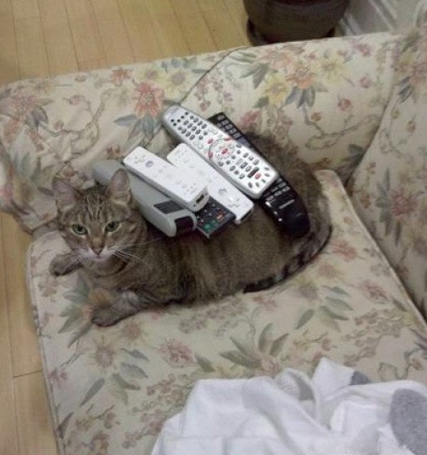 Top 10 Images of Cats Controlling the TV