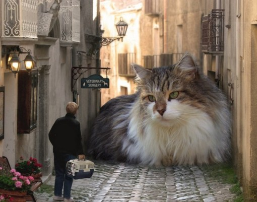 Top 10 Scary Images of Giant Monster Cats