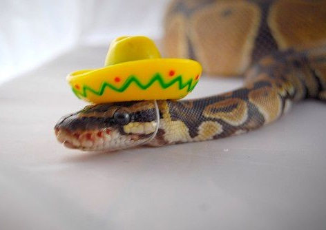 Ten Cute Snakes Wearing Tiny Hats That Make Them Less Frightening