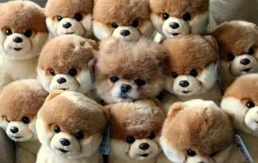 Top 10 Images of Animals Blending In
