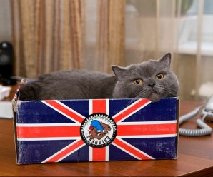 Cats Representing The Worlds 10 Most Powerful Countries