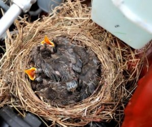 Ten Animals Found in Car Engines Who Survived to Tell the Tale