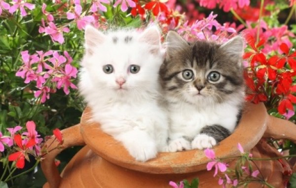 Top 10 Cats With Their Friends