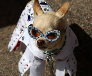 Ten Dogs in Elvis Presley Costumes That Are Nothing but Hound Dogs