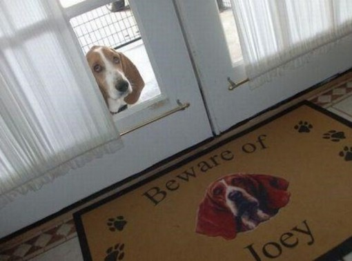 Top 10 Funny Beware of dog Signs