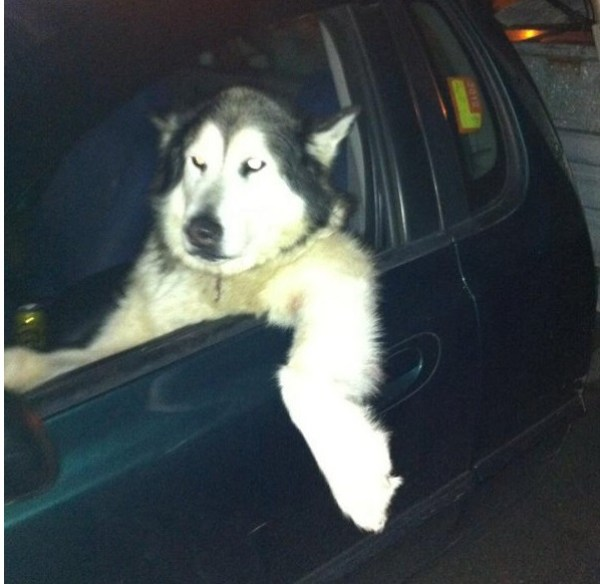 Top 10 Laid Back Dogs