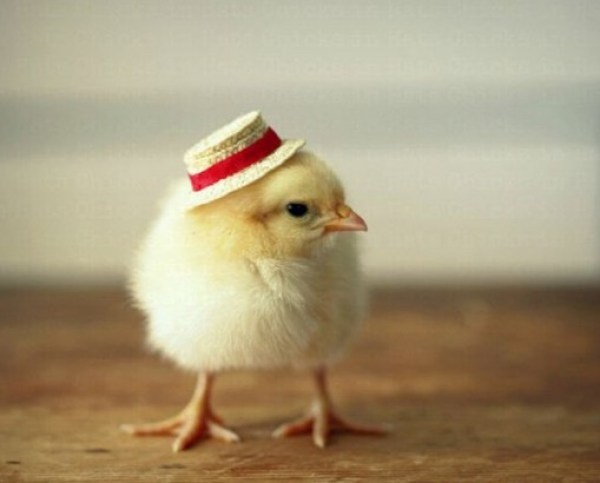 Baby Chick in a Straw Hat