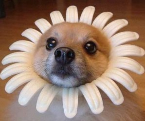 Ten Pictures of Dogs Dressed as Flowers Any Gardener Will Love