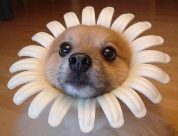 Top 10 Dogs Dressed as Flowers