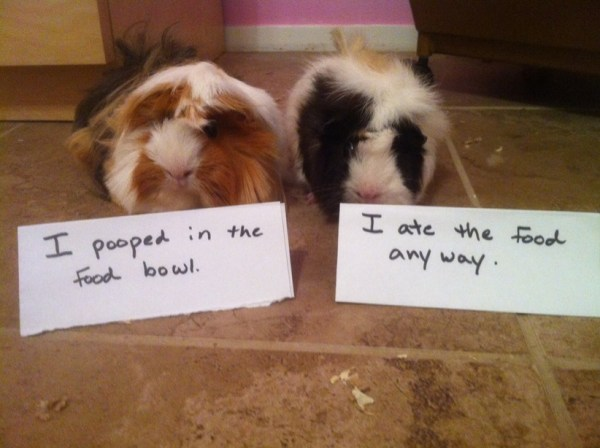 Top 10 Examples of Animal Shaming