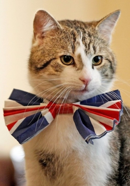 Top 10 Stereotypical Cats From Britain