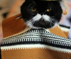 Ten Stereotypical Cats From Mexico Who Probably Aren't Mexican