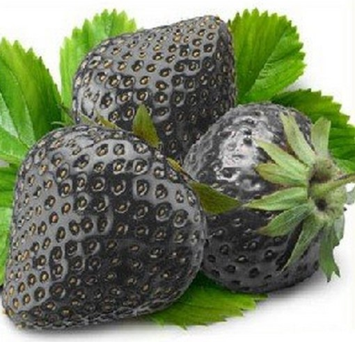 Top 10 Strange, Rare and Unusual Strawberries