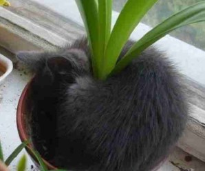 Ten Homegrown Cats Who Think Houseplants Are Cats Beds