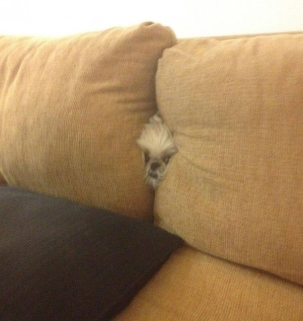 Top 10 Funniest Images of Dogs Hiding