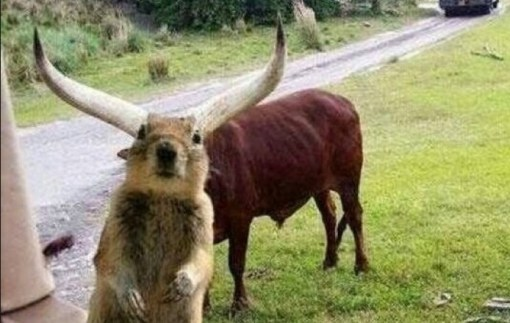 Top 10 Funny Animal Head Photobombs