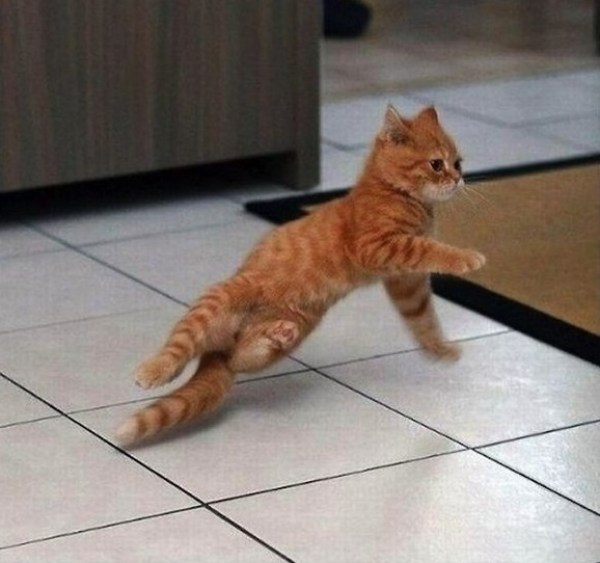 Top 10 Funny Images of Animals Dancing